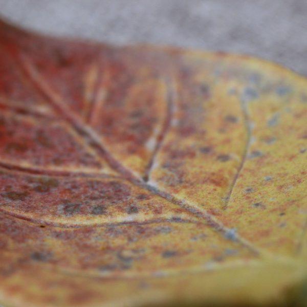 TSUNE 箸置き -紅葉-